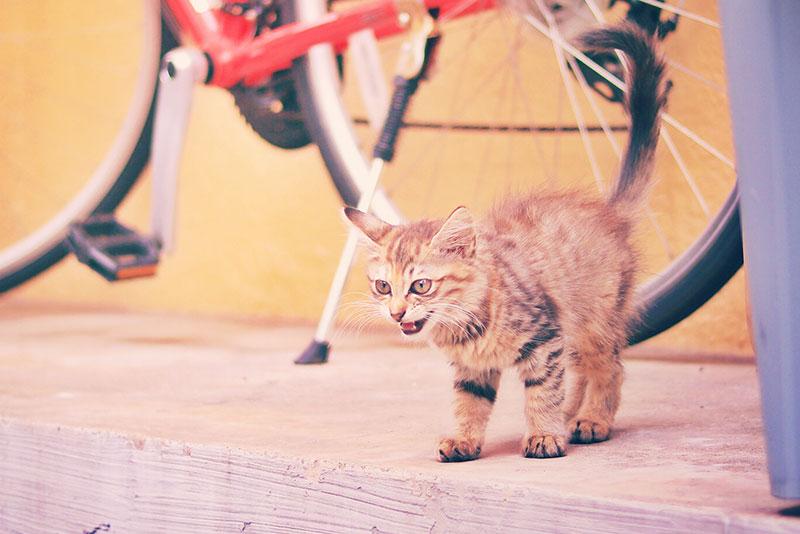 ネコびっくり